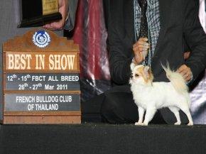 FBCT Championship Dog Show 1/2011(AB1)