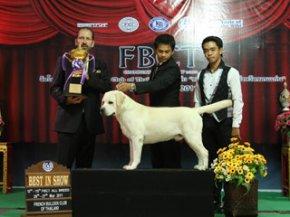 FBCT Championship Dog Show 1/2011(AB3)