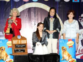 The Mall Toy Dog Championship Show 2/2011(AB3)