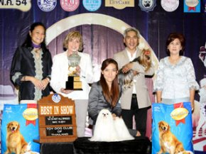 The Mall Toy Dog Championship Show 2/2011(AB4)
