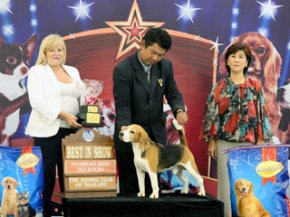 THE MALL FCI INTERNATIONAL CHAMPIONSHIP DOG SHOW 1/2011(AB3)