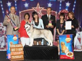 THE MALL FCI INTERNATIONAL CHAMPIONSHIP DOG SHOW 1/2011 (AB4)