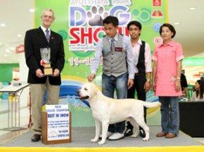 Ayutthaya Park Dog show 2011(AB3)