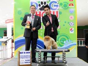 Ayutthaya Park Dog show 2011(AB4)