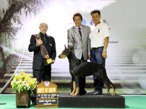 FBCT Championship Show 2/2011(AB4)