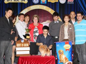 The Mall Toy Dog Championship Show 3/2011(AB3)