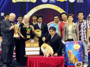 The Mall Toy Dog Championship Show 3/2011(AB4)
