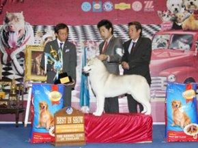Bangkok Grand Dog Show 2011(AB1)