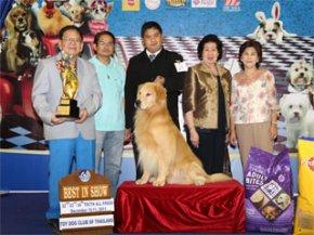 TOY DOG CLUB CHAMPIONSHIP DOG SHOW 2011(AB1)