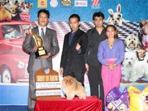 Toy Dog Club Championship Dog Show 5/2011(AB3)