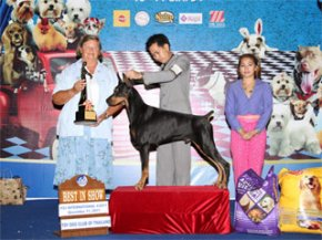Toy Dog Club Championship Dog Show 5/2011(AB4)