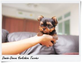 โรคไวรัสลำไส้อักเสบติดต่อในสุนัข