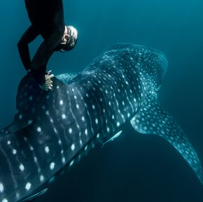 Rolex Perpetual Planet 'Heroes of the Oceans' Documentary