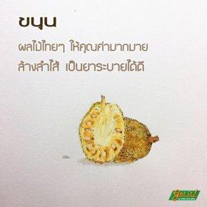 ขนุน (Jackfruit, Jakfruit