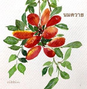 นมควาย (Uvaria rufa Blume)