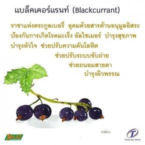 แบล็คเคอร์แรนท์ (Black currant)