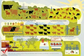 Beef : from Farm to Falk