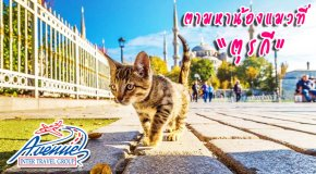 เที่ยวตุรกี นครแห่งแมว