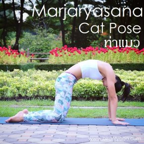 Cat Pose / Marjaryasana