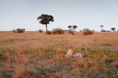 """หลังม่านชัตเตอร์ ของ เจ้าหญิงดีไซเนอร์ สู่นิทรรศการภาพถ่ายฝีพระหัตถ์ """"Little Wild"""""""