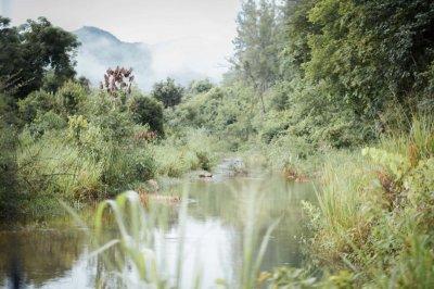 """""""สยามไวเนอรี่"""" ร่วมฟื้นฟูพื้นที่ป่า เพิ่มแหล่งอาหารสัตว์ สร้างสมดุลในการอยู่ร่วมกันของคน และป่า"""