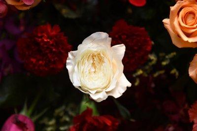 """""""71 ปี ห้างเซ็นทรัล"""" จัดใหญ่ The World Of Floral Wonders เนรมิตดอกไม้นับล้านดอก ให้เป็นสวนสวรรค์"""