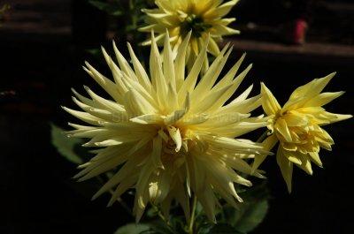 Shutter Mind Flower