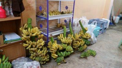 กล้วยทอด นครปฐม