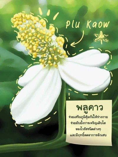 Calendar herbal supplement