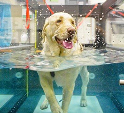 บริการกายภาพบำบัดด้วยธาราบำบัด-สระน้ำ