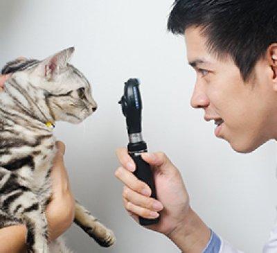 ศูนย์การแพทย์เฉพาะด้านดวงตา