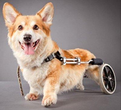 ศูนย์การแพทย์เฉพาะด้านอุปกรณ์ช่วยเหลือสัตว์พิการ