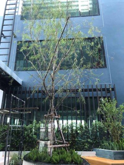 อาคารสำนักงาน  D.R.Industrial  ถนนอ่อนนุช