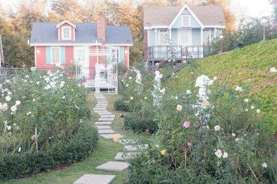 Vin View Rose Garden เขาค้อ เพชรบูรณ์