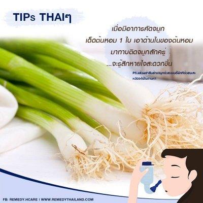 TIPs Thaiๆ : เกี่ยวกับต้นหอม