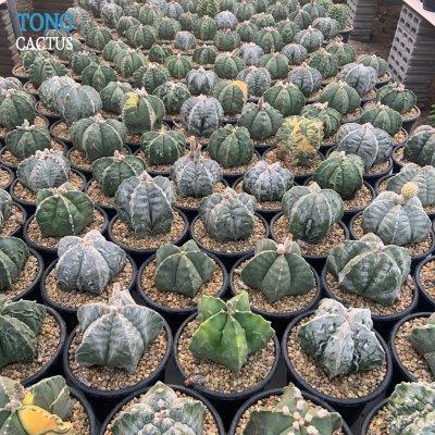 Tongcactus Nursery