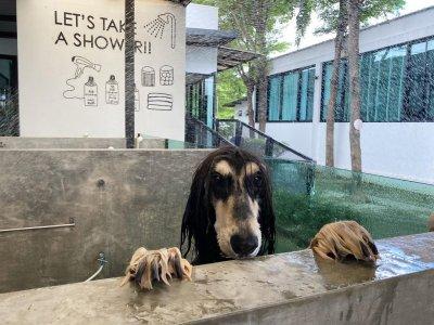 pet's ville DOG  SHOWER & DRY