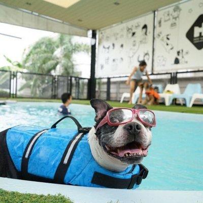 pet's ville pool