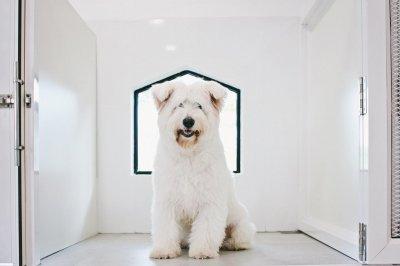 pet's ville dog hotel