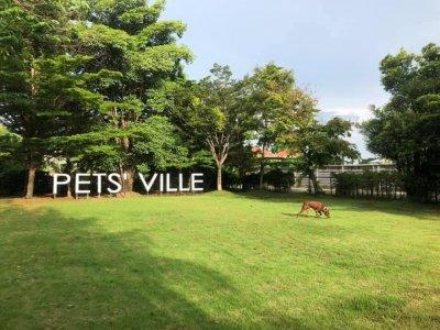 pet's ville park
