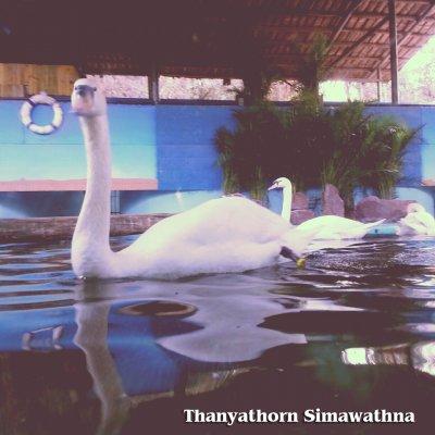(七) Friends - Animals