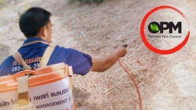 กำจัดปลวก Termite Control