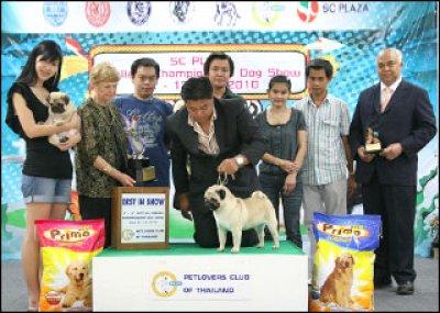 Sc Plaza Thailand Championship Dog Show 12-13 June 2010