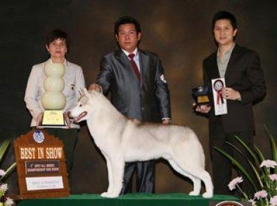 CENTRAL PLAZA INTERNATIONAL DOG SHOW 2010