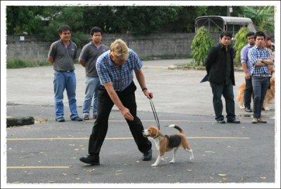 สัมมนาให้ความรู้เรื่องการจูงสุนัข