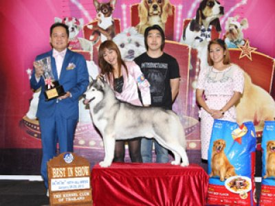 Champion Of Champions Dog Show 2012(AB3)