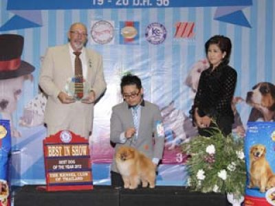 Best Dog Of The Year 2012