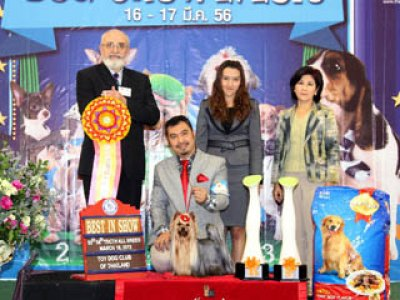 The Mall Toy Dog Championship Dog Show 2/2013(AB2)