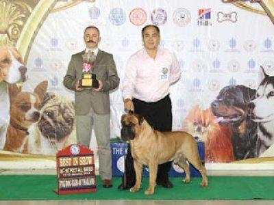 TAWANNA NGAMWONGWAN NATIONAL DOG SHOW 2014(AB1)