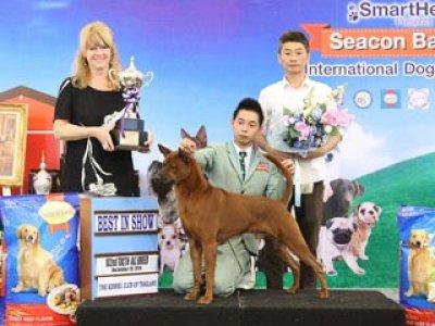 Seacon Bangkae International Dog Show 2014_AB3